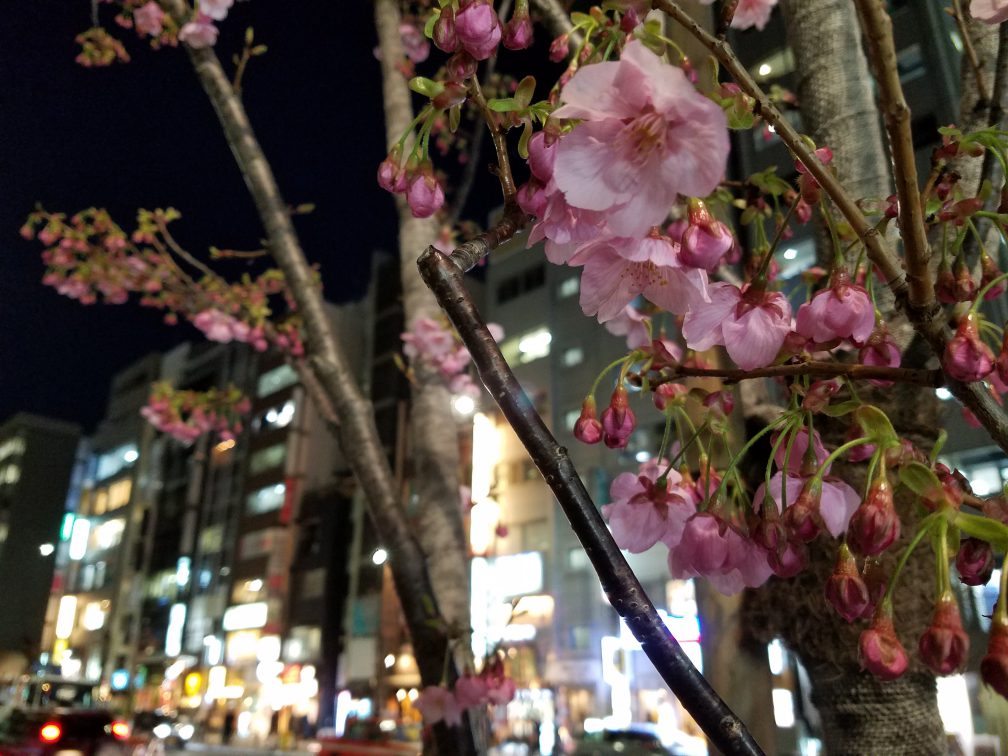 Early Sakura captured on a MAction Planet Artokyo Art Tour