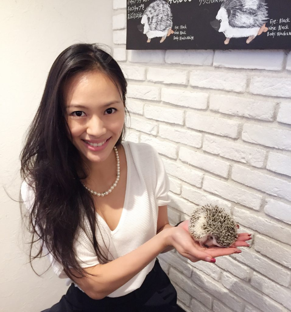 Hedgehog cafes part of our Quirky Tokyo Tours