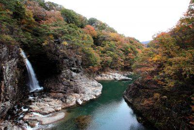 Japan Autumn Leaves seen on a Maction Planet Tokyo Autumn Leaves Tour