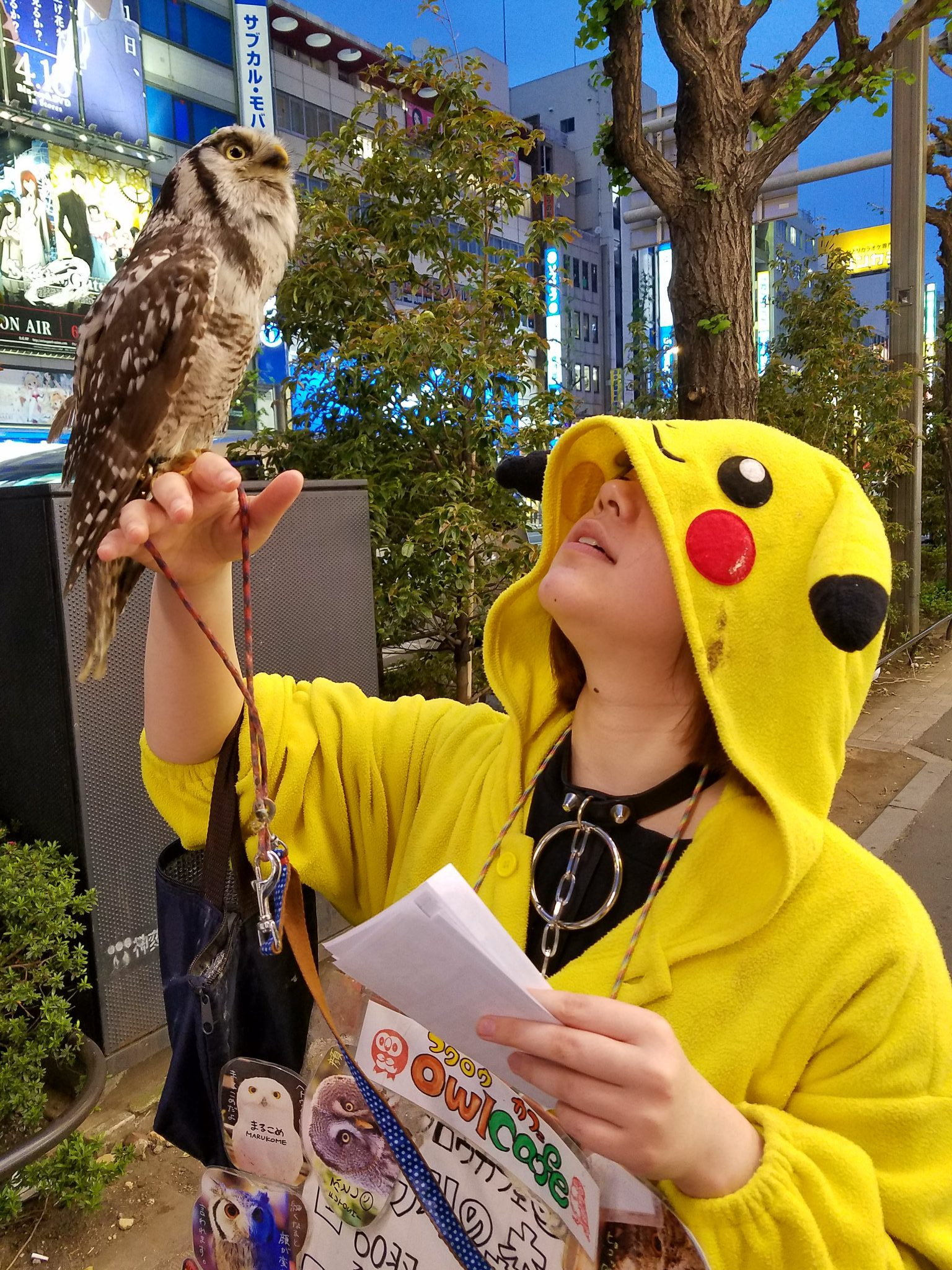 Touting for an Owl Cafe on the streets of Tokyo Electric Town, Akihabara - spotted on a Maction Planet Tokyo Otaku Tour
