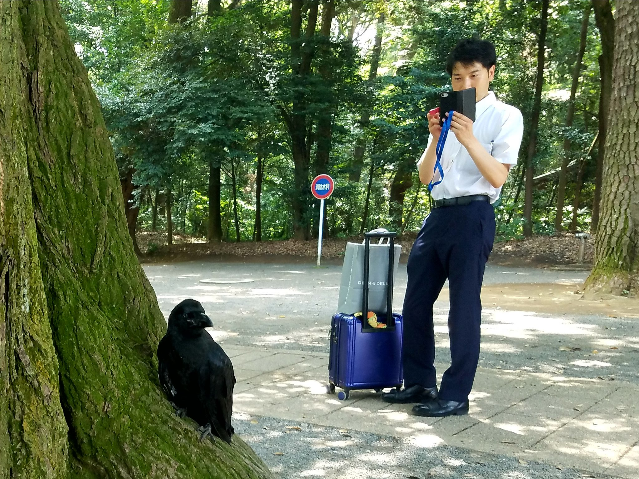 Man taking photo of crow in Meiji Jingu seen on a Maction Planet Tokyo Private Tour