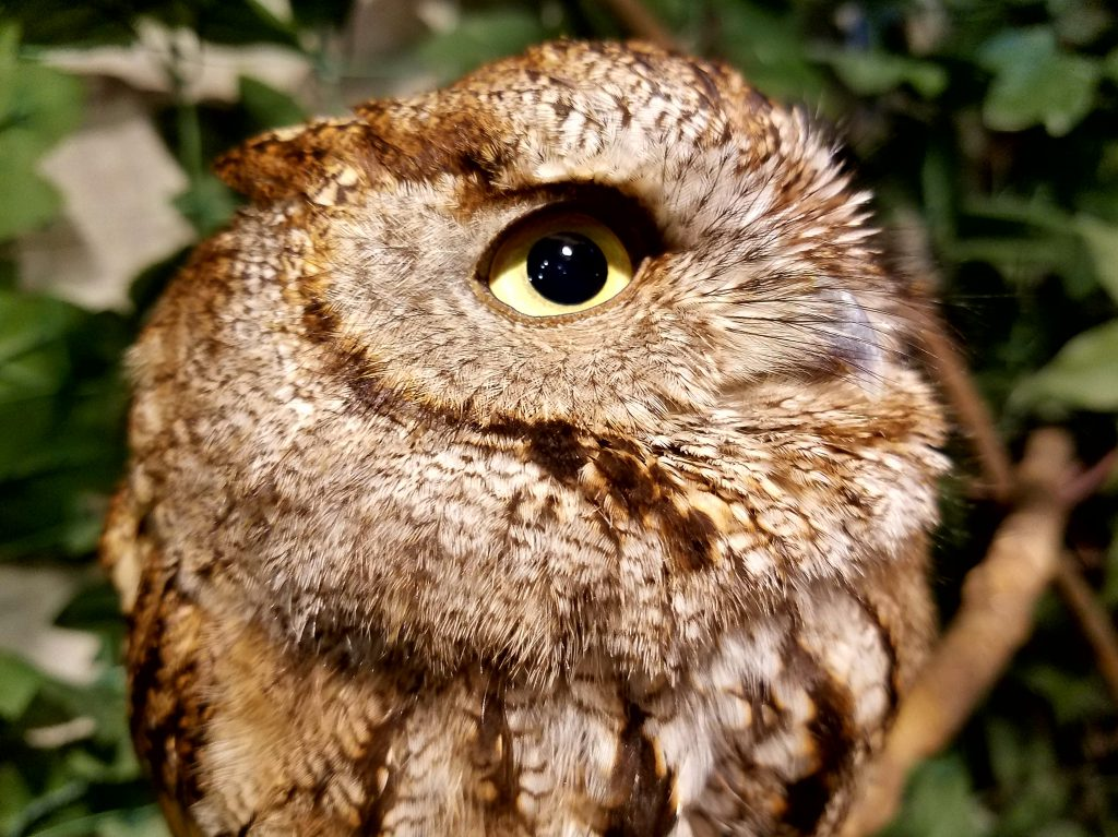 Eye to eye at Harajuku Owl Forest on a Maction Planet Tokyo Private Tour