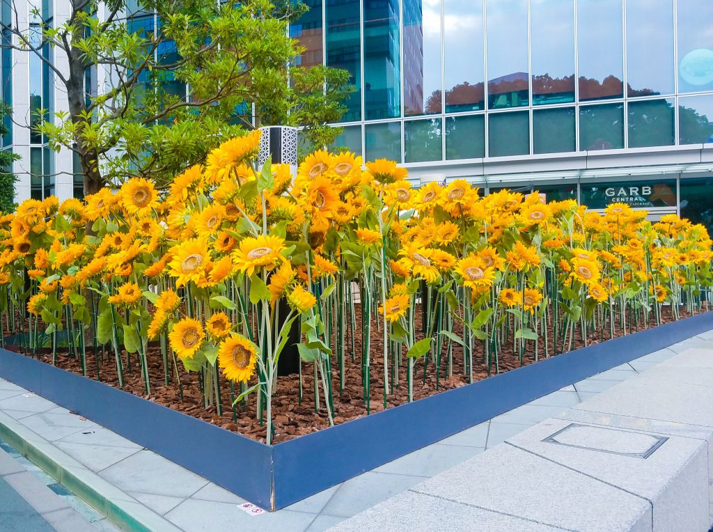 Sunflowers outside Prince Gallery Tokyo Kioicho