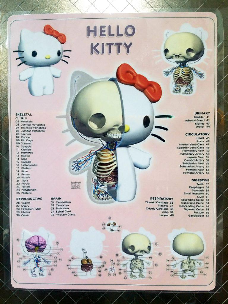 Hello Kitty Anatomy Chart