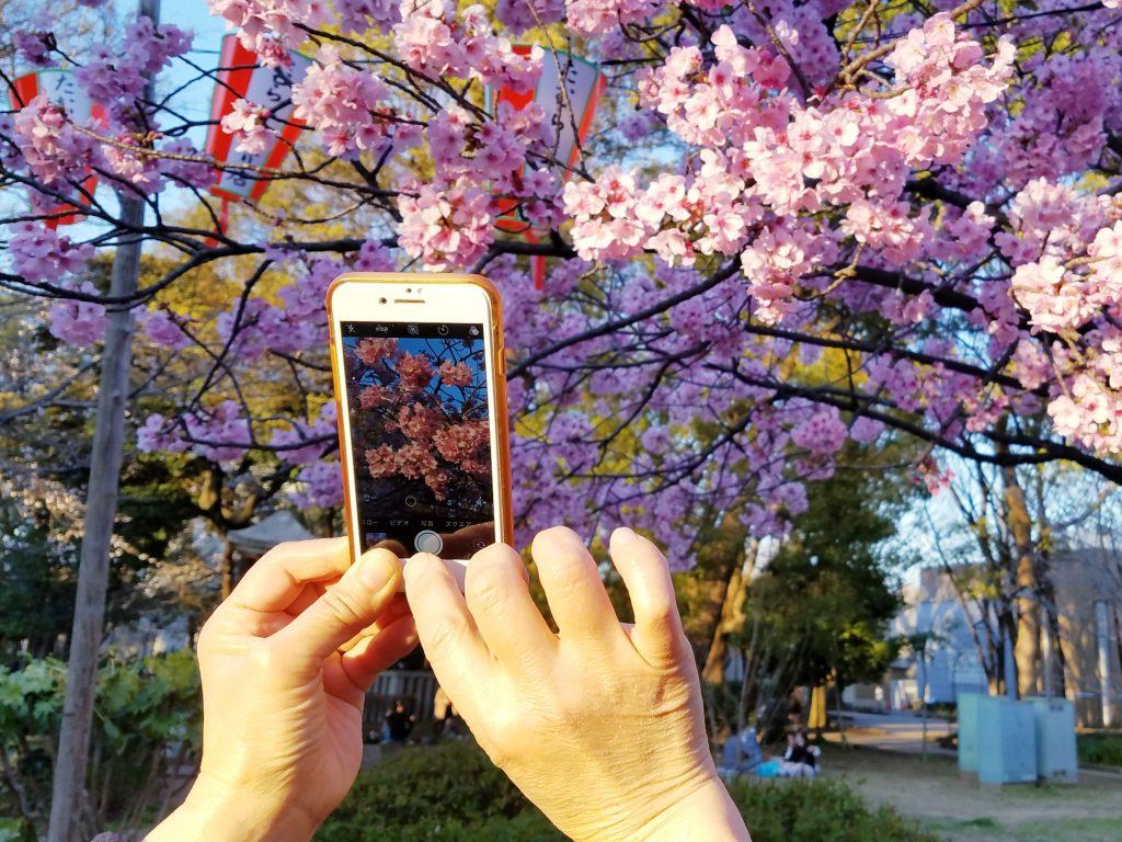 Taking photos of Cherry Blossoms in Ueno Park