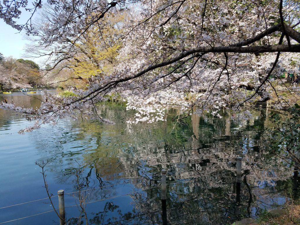 Inokashira Park in Kichijoji, Tokyo on Saturday 21 March 2020