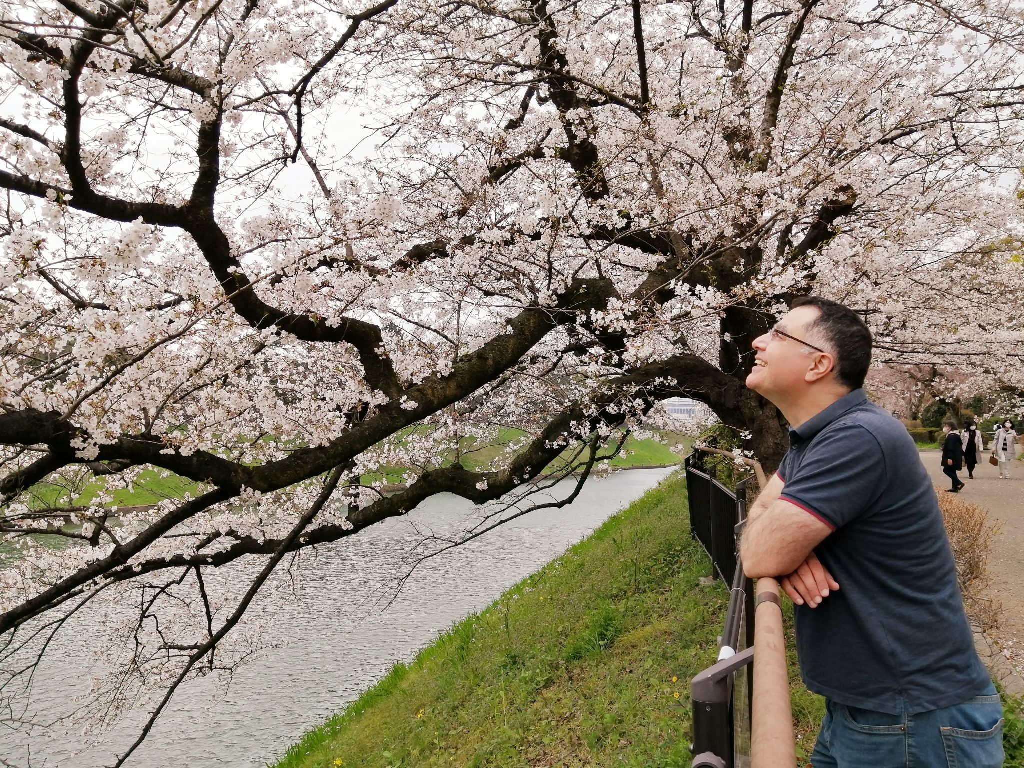 Mac, Founder and Lead Guide of Maction Planet Bespoke Travel, under the sakura cherry blossoms