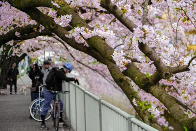 Tokyo Bike Tours - private and bespoke Tokyo Cycling Tours from Maction Planet