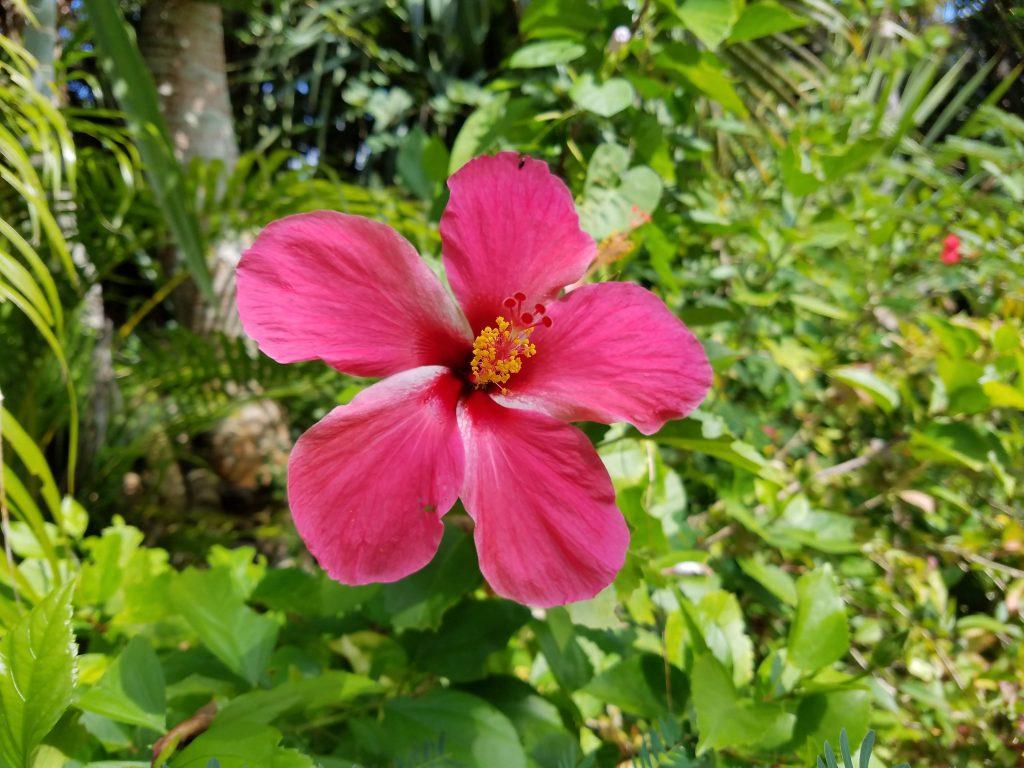 Yubu Island Flora