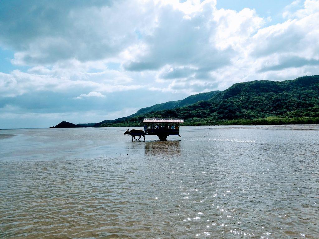 Yubu Island Water Buffalo Taxi