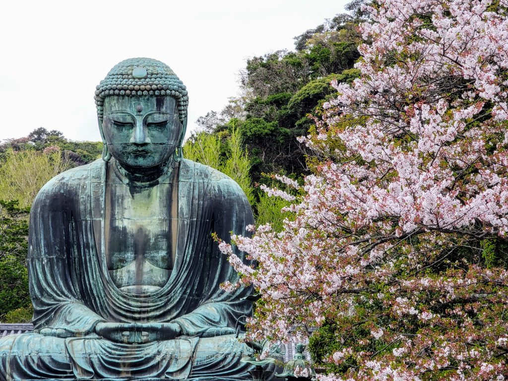 Sakura and Kamakura Daibutsu Giant Buddha
