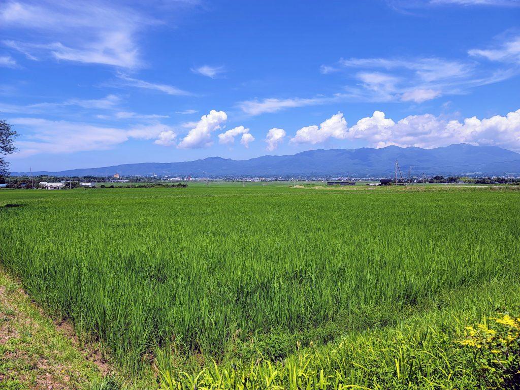 Rice fields on Sado Island
