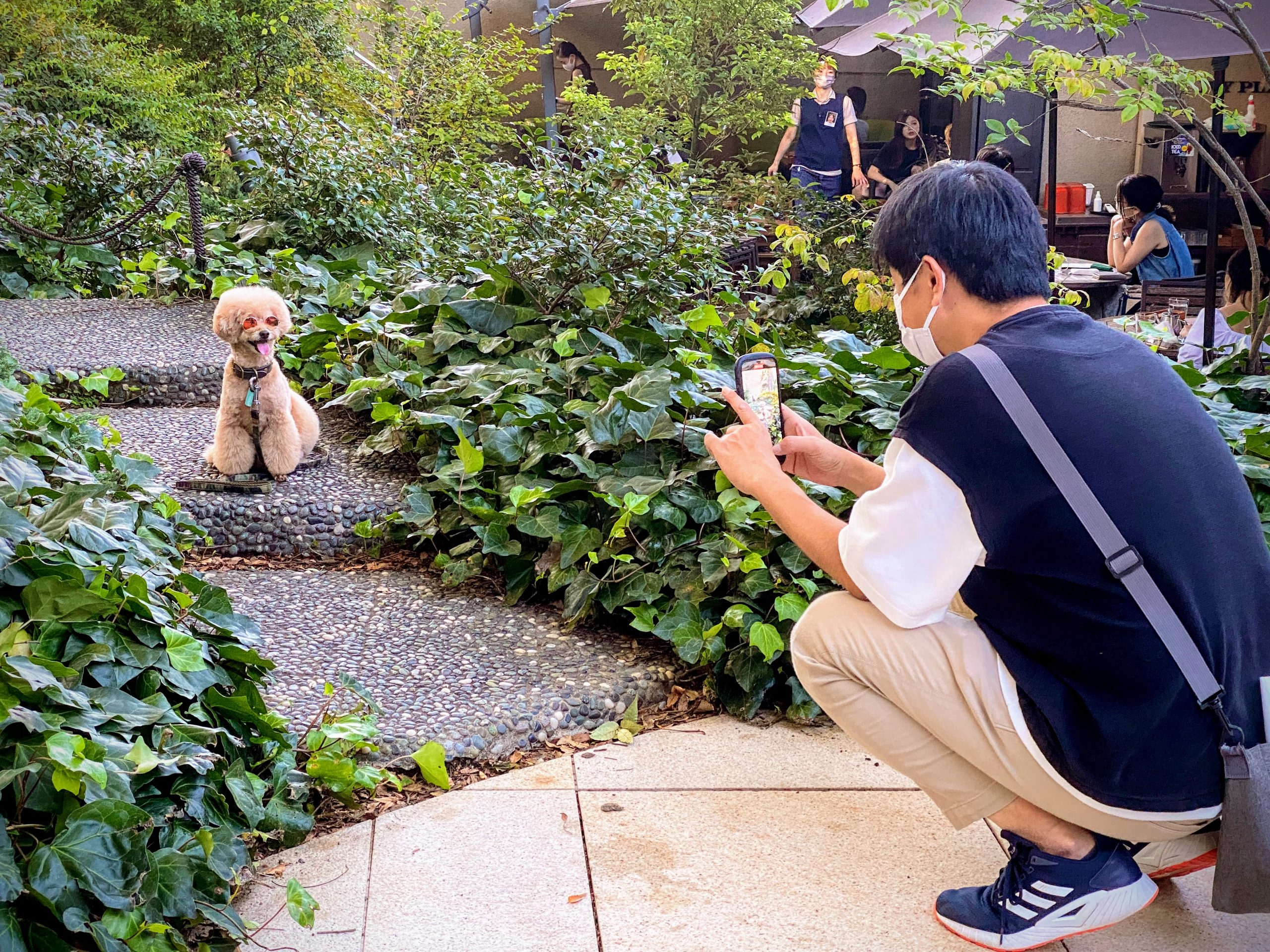 Dog posing for photo in Tokyo